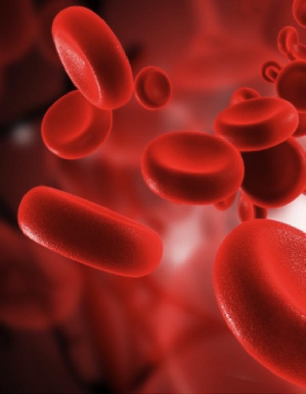 Con il sangue giovane si può arrestare l'invecchiamento?